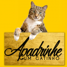 Castração felina de Araraquara