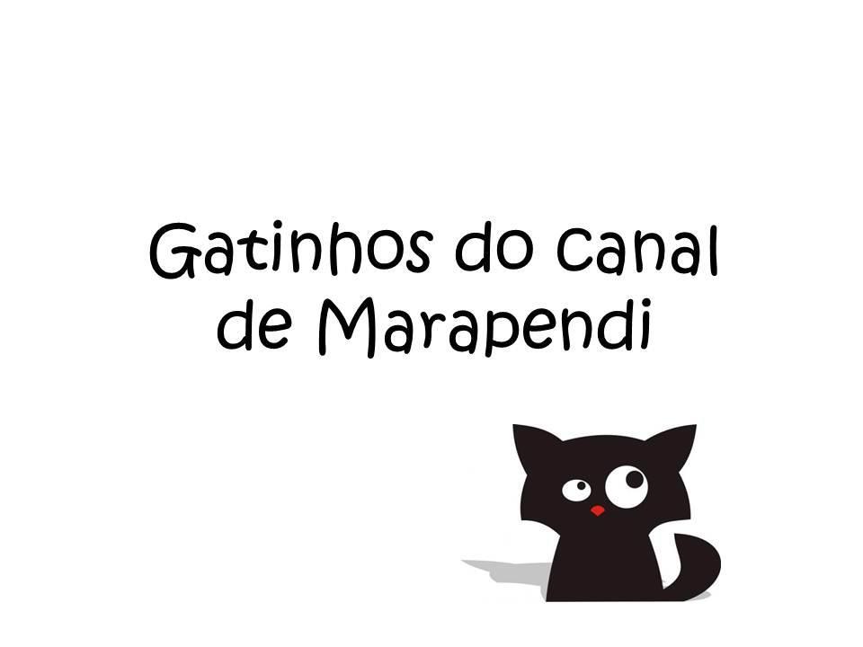 Gatinhos do Canal Marapendi
