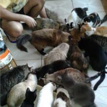 Salva Miau